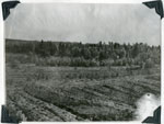 Agreement Forest, Machar Township, May 20th, 1964