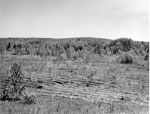 View of Machar Township Agreement Forest, May 20th, 1964