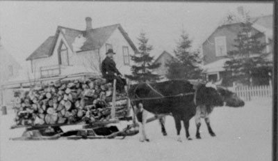Two Oxen Pulling Sleigh of Fire Wood