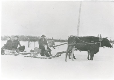J. P. Johnstone with his Wife and Daughter on an Ox Drawn Sled, circa 1915