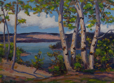 Haliburton Birches