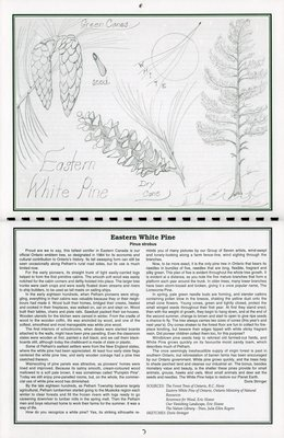 """Pelham Historical Calendar 1996: """"Eastern White Pine Pinus strobus"""""""