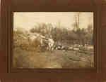 Sawmill in Farlton