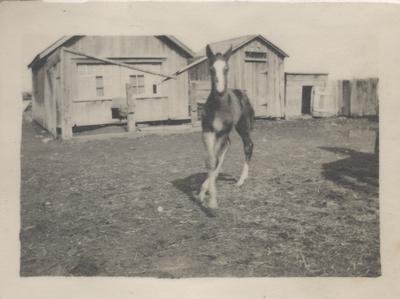 Horse On Ford Farm