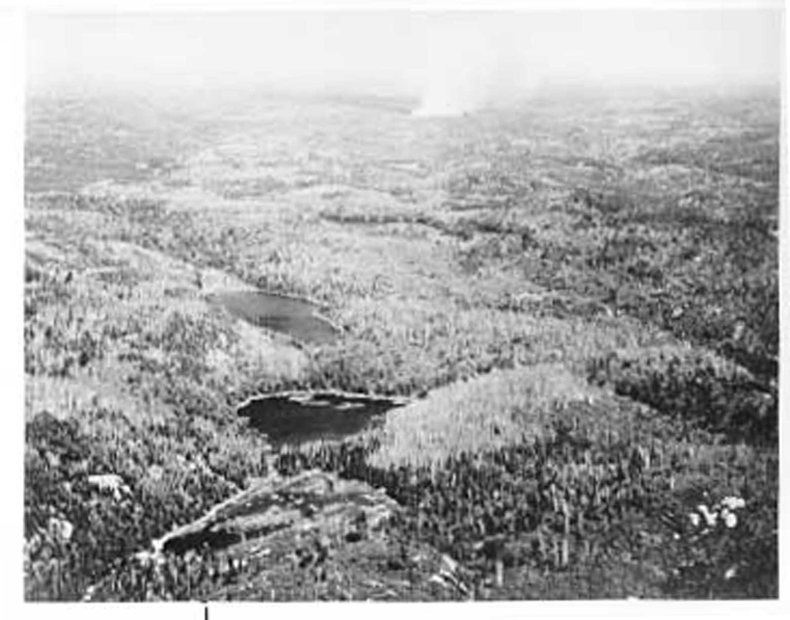 Aerial View, Forest Fire, circa 1948 (1/14)