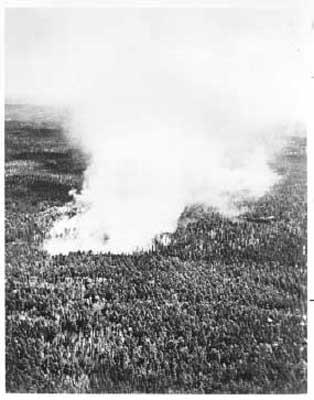 Forest Fire, circa 1948 (2/14)