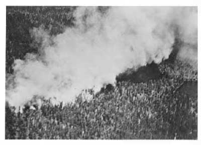 Forest Fire, Crica 1948, (3/16)