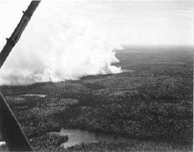 Forest Fire, circa 1948 (5/14)