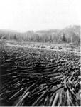 Pulpwood in the Aguasabon River