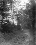 Lovers' Lane, ca.1890's.  Cavendish, P.E.I.