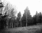 Corner of Ernest Webb's field, ca.1890's.  Cavendish, P.E.I.