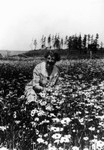Lucy Maud Montgomery in a field of flowers, ca.1935