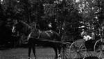 Stella Campbell in buggy, ca.1900.  Park Corner, P.E.I.