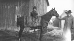 Ewan holding Queen the horse and Chester sitting on the horse's back, ca.1916.  Leaskdale, ON.