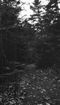 Forest path, Cavendish places, P.E.I.