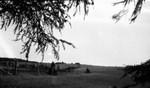 Cavendish field, Cavendish, P.E.I.