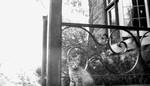 Cat on porch.