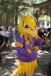 Golden Hawk mascot at a Laurier fundraising barbecue, 2006