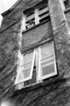 Margaret Culp leaning out of a Willison Hall window