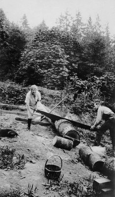 Log cutting in garden