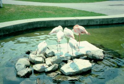 Waterloo Park Zoo Flamingos