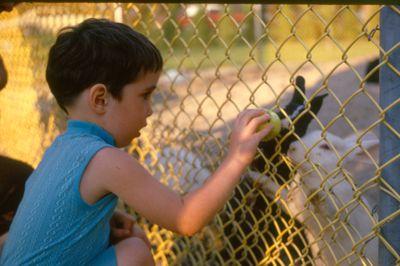 Boy Feeding Rabbits at Waterloo Park