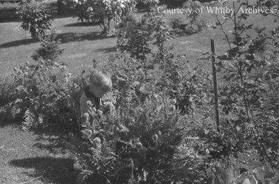 Eric looking at poppies, May 1939