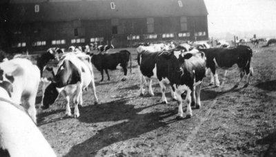 Ontario Hospital Farm, ca.1930