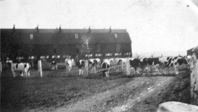 Ontario Hospital Farm, 1930