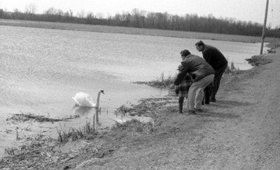 Lynde Creek Marsh, April 1976