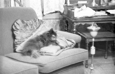 Laddie Asleep, November 1936