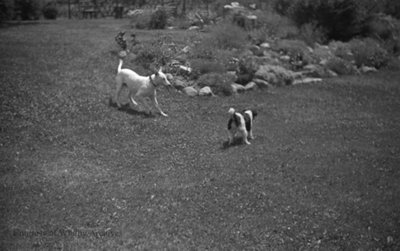 Dogs Playing, c.1937