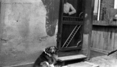 Unidentified Dog, c.1915