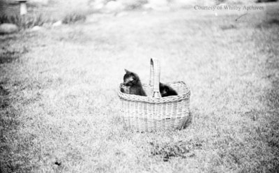 Kittens in a Basket, July 1936