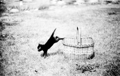 Jumping Kitten, July 1936