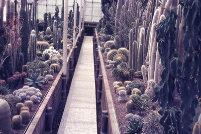 Greenhouse, May 1976