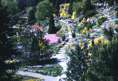Garden Pathways, July 1978