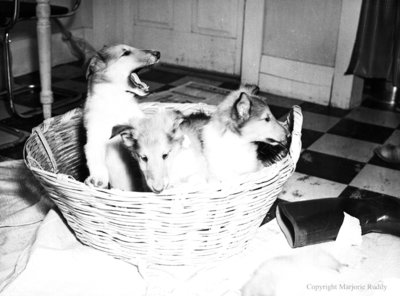 Rowley Collies, February 28, 1950