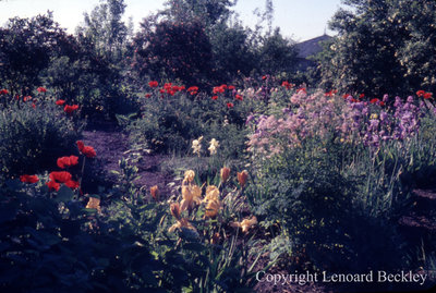 Leonard Beckley's Garden, July 1970