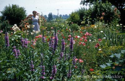 Leonard Beckley's Garden, c.1977