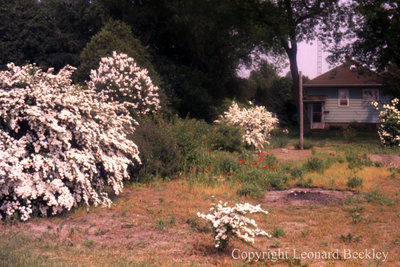 Leonard Beckley's Backyard, June 1983