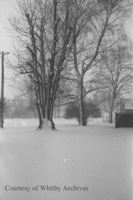 Snow Covered Trees, January 1939