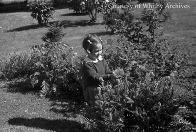 Norma looking at poppies, May 1939