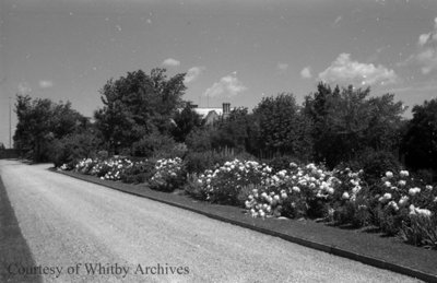 Driveway at Stonehaven, June 1939