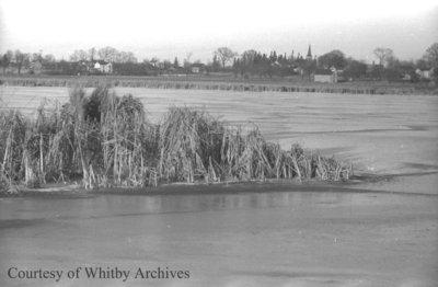 Cranberry Marsh, January 1938