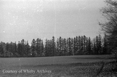 Crawforth Farm, October 12, 1938