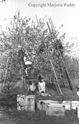 Apple Picking, 1941