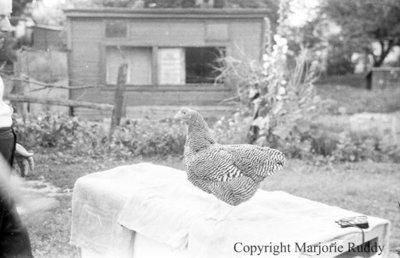 John Thomas's Chicken, July 21, 1939