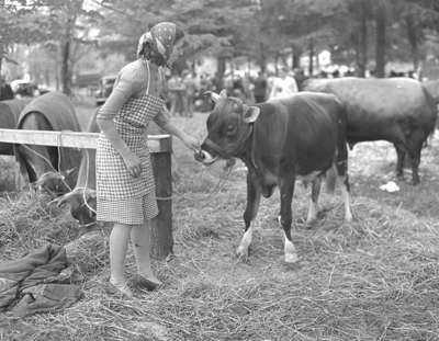 Cattle Show - Jerseys (Image 4 of 5)