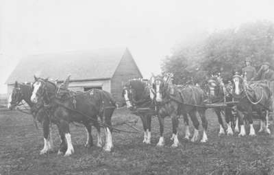 Clydesdale Horses on Duff Farm
